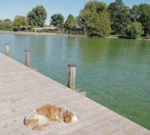 慕尼黑必玩-Starnberger See 施坦貝爾格湖