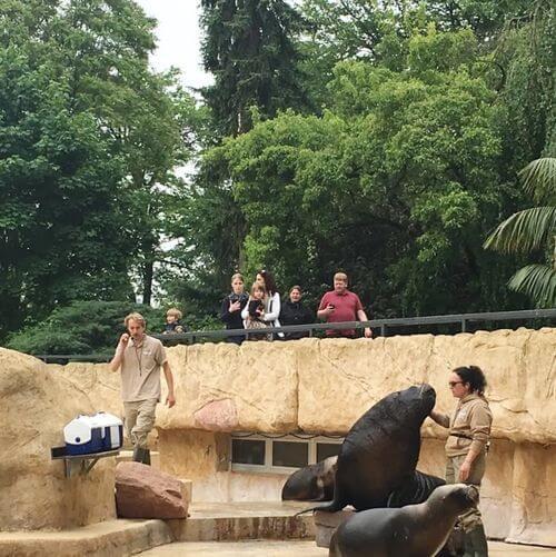 德國海德堡Heidelberg必玩-Zoo Heidelberg 海德堡動物園