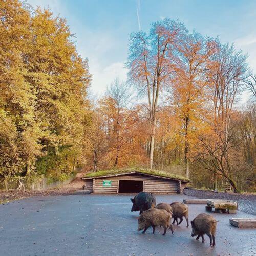 德國杜塞道夫必玩-Wildpark Düsseldorf Grafenberg 野生動物園