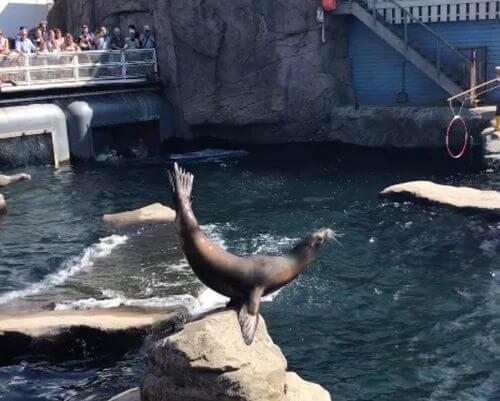 德國漢諾威Hannover必玩-Erlebnis-Zoo 漢諾威動物園