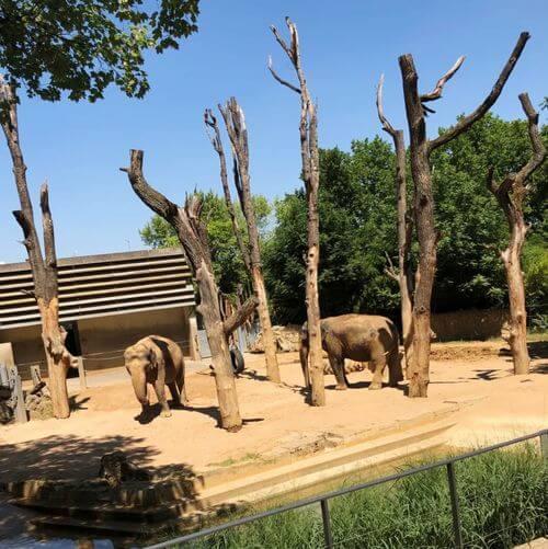 德國司徒加特=斯圖加特Stuttgart必玩-Wilhelma Zoological-Botanical Garden 威廉瑪動植物園