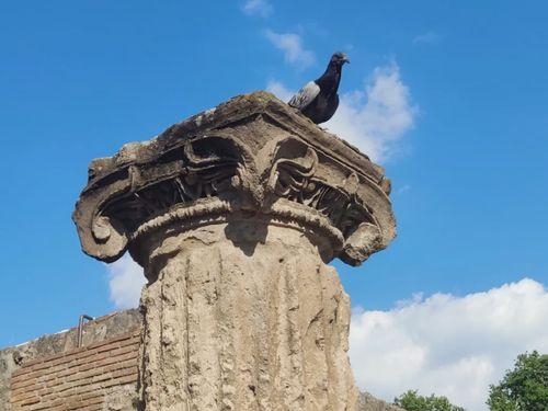 義大利龐貝 = 蓬佩伊 Pompeii 必玩 - Regio VIII 2 Basilica (義 Basilica)