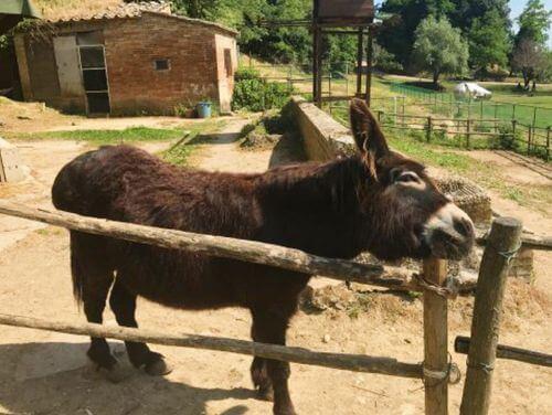 義大利西恩納 = 錫耶納 Siena 必玩 -All'Orto de' Pecci 野生動物花園餐廳