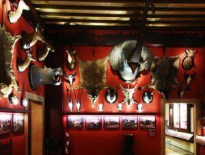 義大利威尼斯 Venice 聖十字區 Sestiere Santa Croce 必玩 - Museo di Storia Naturale 威尼斯自然歷史博物館