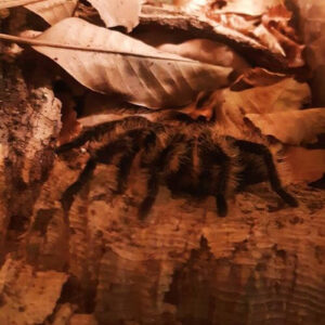 義大利威尼斯 里瓦∙德爾∙加爾達 Riva del Garda 必玩 - Reptiland - Galleria di Scienze Naturali e Centro Erpetologico 爬蟲類博物館